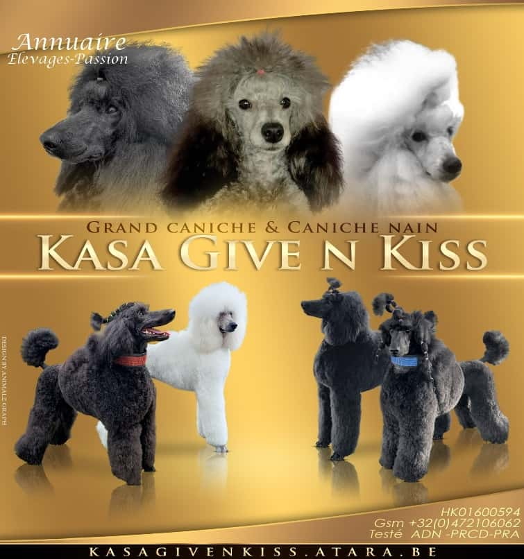 Read more about the article Kasa Give n Kiss