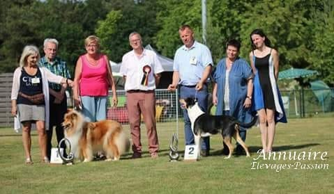 The Collie Association