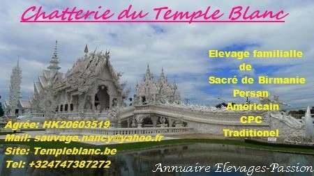 Read more about the article Du Temple Blanc